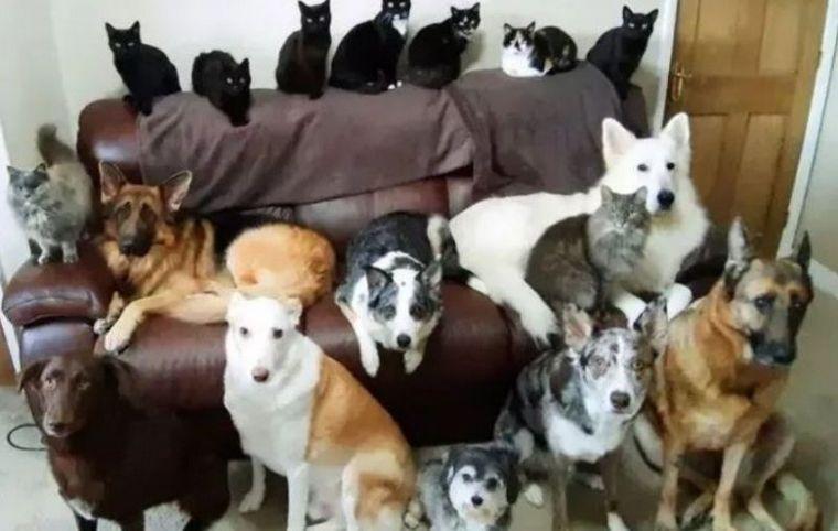 Logra 'sincronizar' en una foto perfecta a sus 17 mascotas