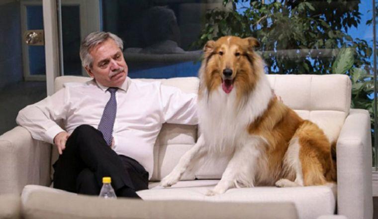 FOTO: Alberto Fernández junto a su perro border collie, Dylan.