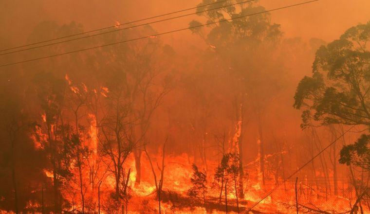 FOTO: Los incendios quemaron millones de hectáreas en Australia.