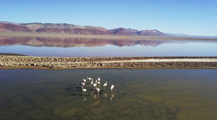 VIDEO: Lagunas de Carachi Pampa - Catamarca