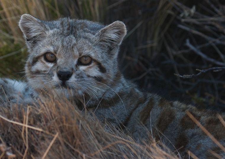 AUDIO: Reapareció en Mendoza un animal en peligro de extinción
