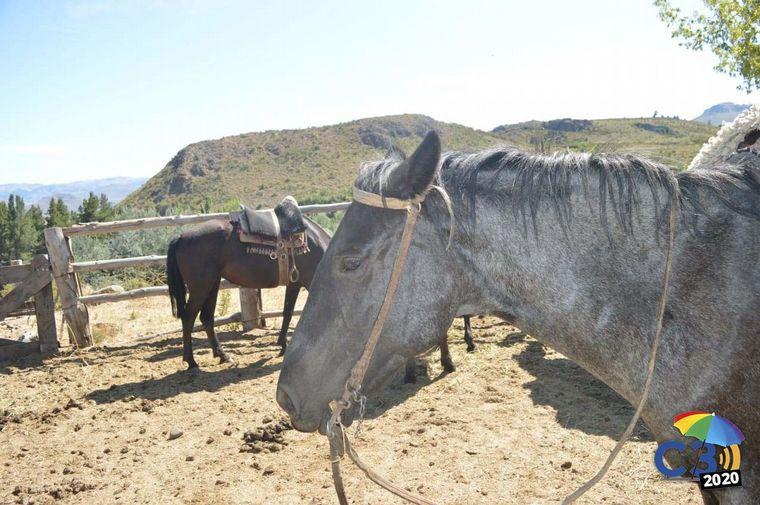 AUDIO: Cabalgata por el Cerro Leones, otra mirada de la Patagonia (por Marcela Psonkevich)