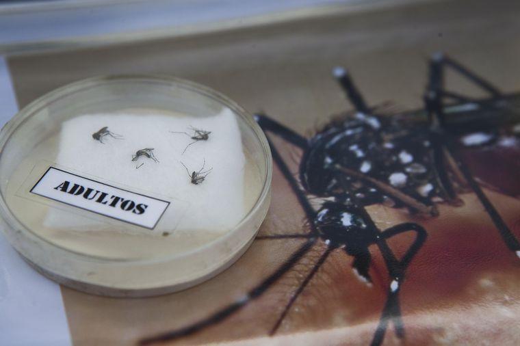 FOTO: Aumentaron los casos de dengue en Córdoba