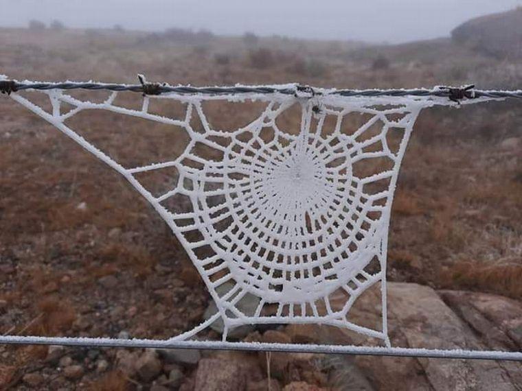 FOTO: Se congeló una tela de araña en Traslasierra (Foto: José Zárate / Mañana Brocheriana)