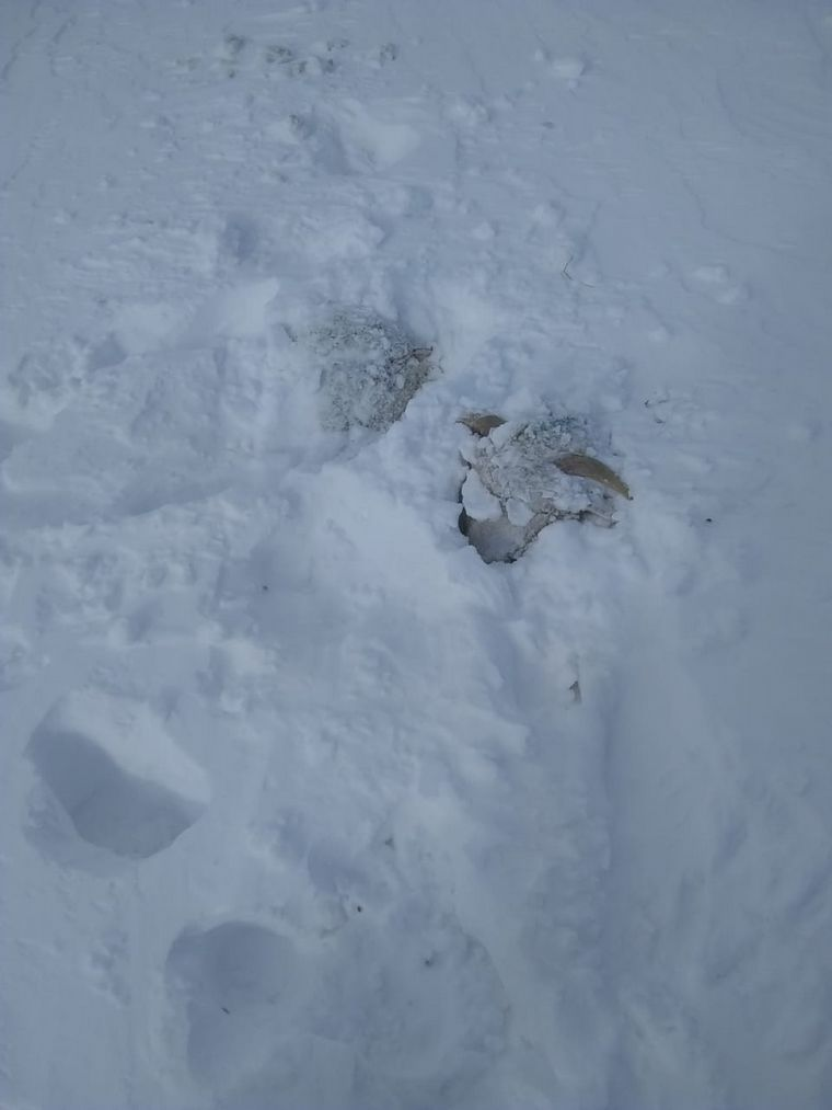 FOTO: Animales temporal nieve