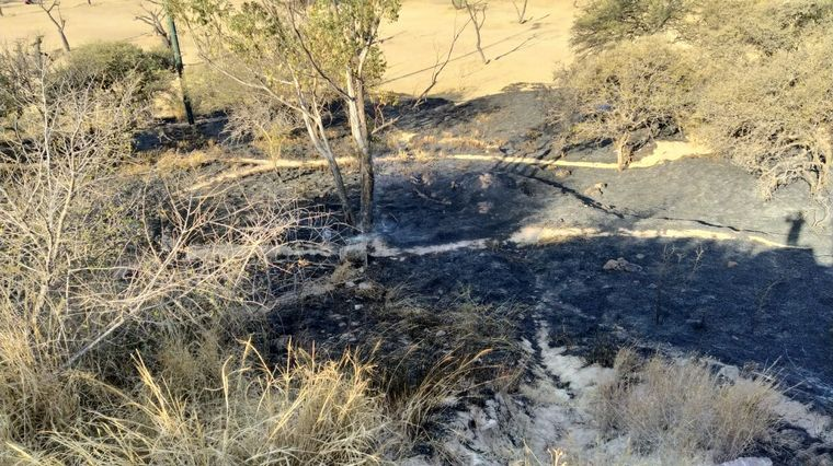 AUDIO: Susto por un incendio en el Parque Sarmiento, cerca del Zoológico de Córdoba