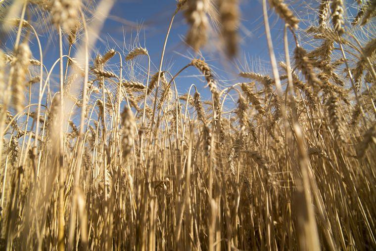 FOTO: La liquidación de exportaciones agroindustriales fue de U$S 2.300 millones en julio.