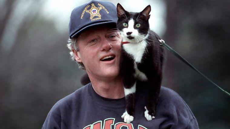 FOTO: El 8 de agosto se celebra el Día del Gato.