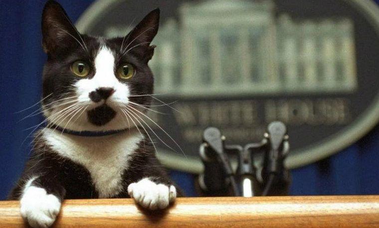 FOTO: Socks, el gato de Bill Clinton.