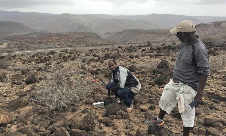 FOTO: La Musaraña era una de las 25 especies perdidas más buscadas.