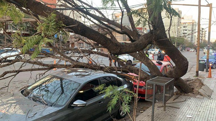 AUDIO: Un añoso árbol aplastó a dos autos en Córdoba