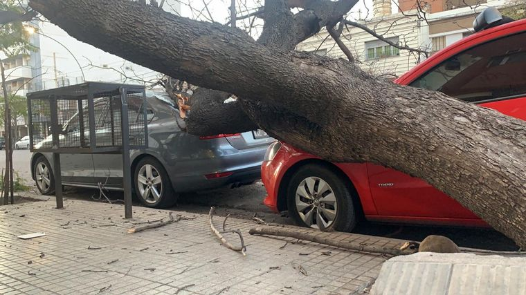 FOTO: Un árbol cayó y dañó dos autos en barrio General Paz.