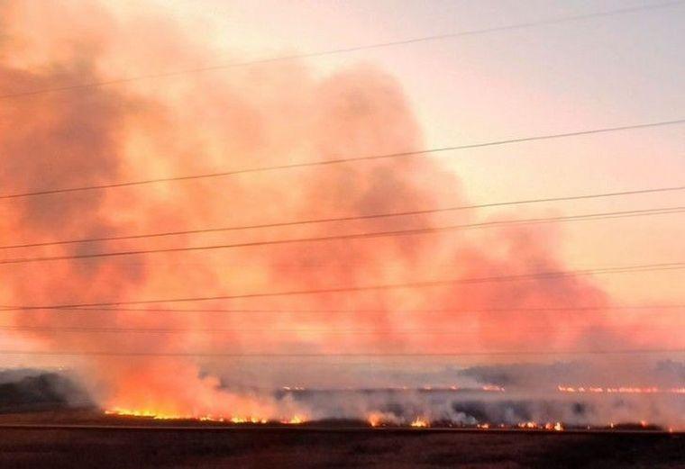 FOTO: La fauna del Delta del Paraná está en peligro por los incendios.
