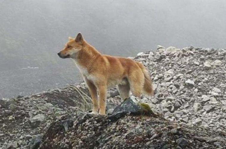 FOTO: Encuentran una especie que creían extinta.
