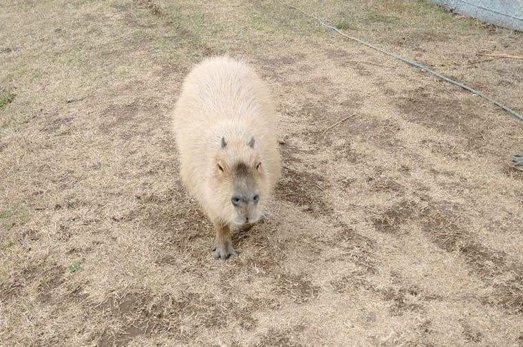 FOTO: Policía Ambiental rescató más de 40 ejemplares de fauna silvestre en cautiverio