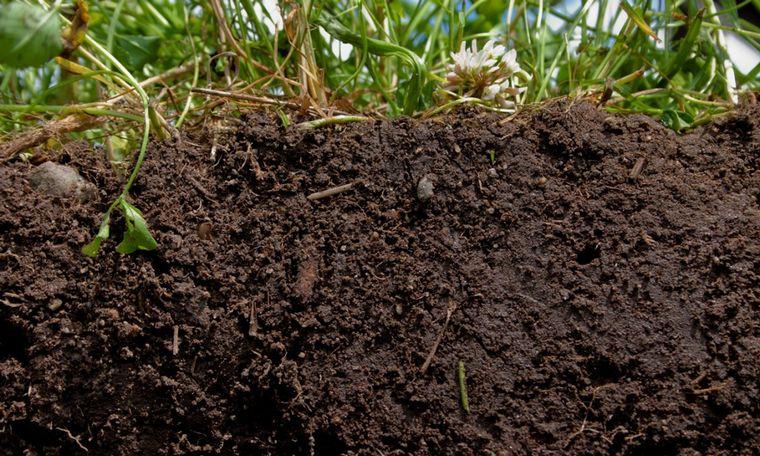 VIDEO: Germán Cravero, ingeniero agrónomo especialista en producción agroecológica.