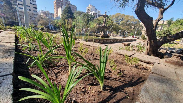 AUDIO: Robaron las plantas que la Municipalidad puso para recuperar la Plaza Colón