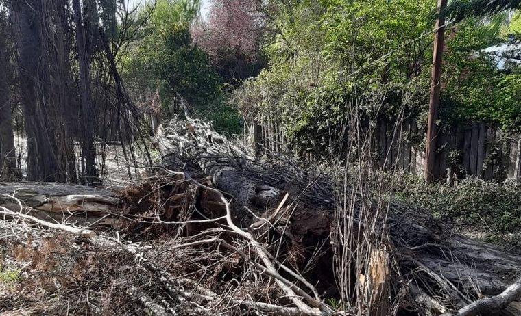 AUDIO: Temporal de viento en Chubut: incendios y casas destrozadas