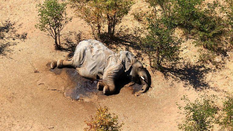 FOTO: Descubrieron la causa de muerte de los elefantes en Botsuana (FOTO: Reuters)