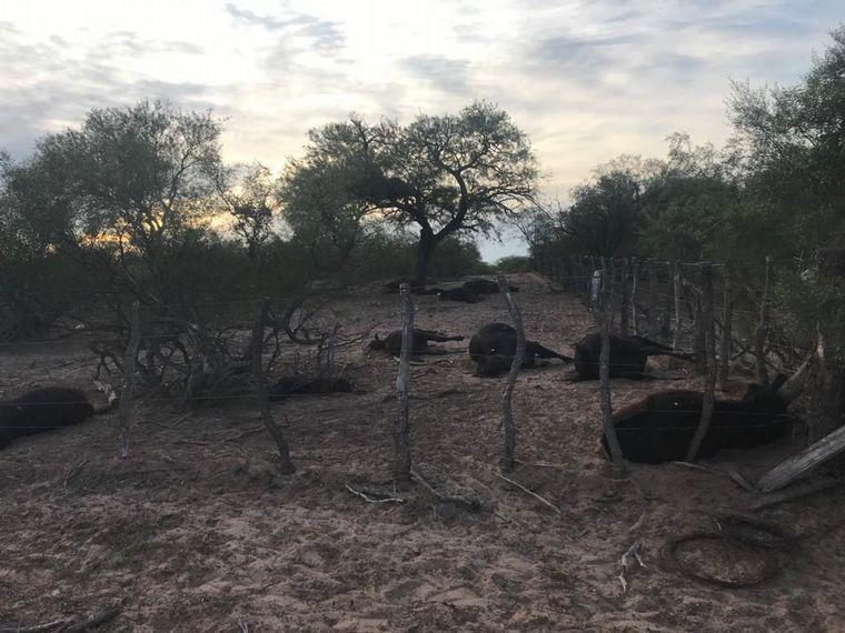 AUDIO: Panorama desolador en San Luis: fallecen animales por restricciones de acceso