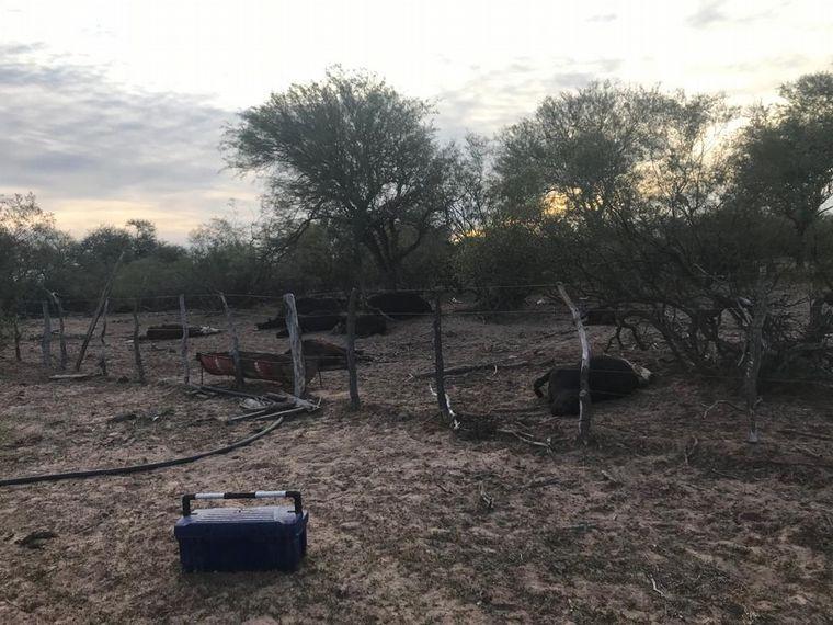FOTO: Panorama desolador en San Luis: fallecen animales por restricciones de acceso