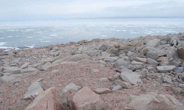 FOTO: El deshielo en la Antártida dejó al descubierto un cementerio de pingüinos