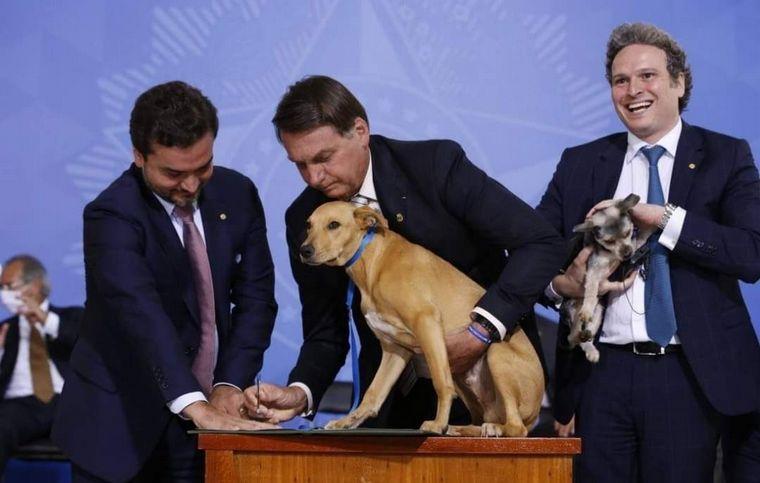 FOTO: Un perro firmó una ley contra el maltrato animal en Brasil.