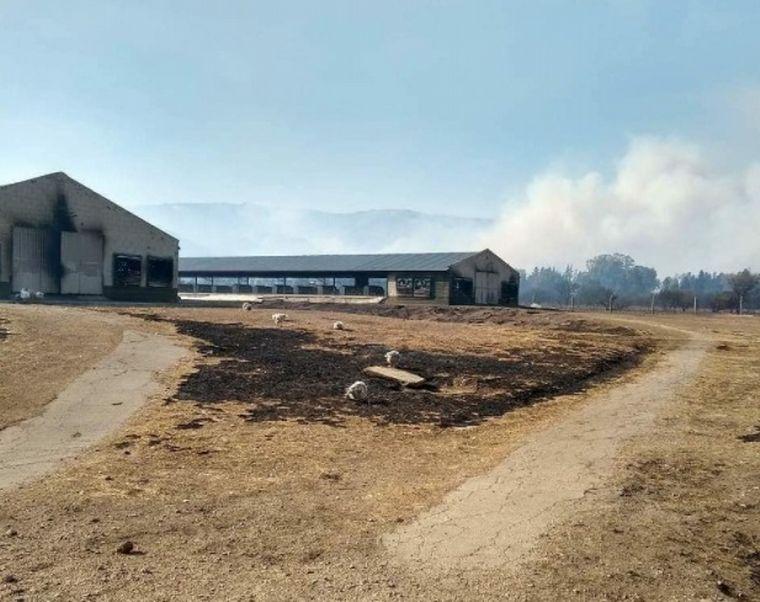 AUDIO: Incendios en San Luis arrasaron con granjas de pollos