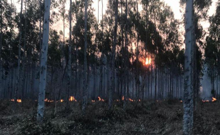 AUDIO: Se quemaron 35 mil hectáreas de bosques nativos y cultivados en Salta