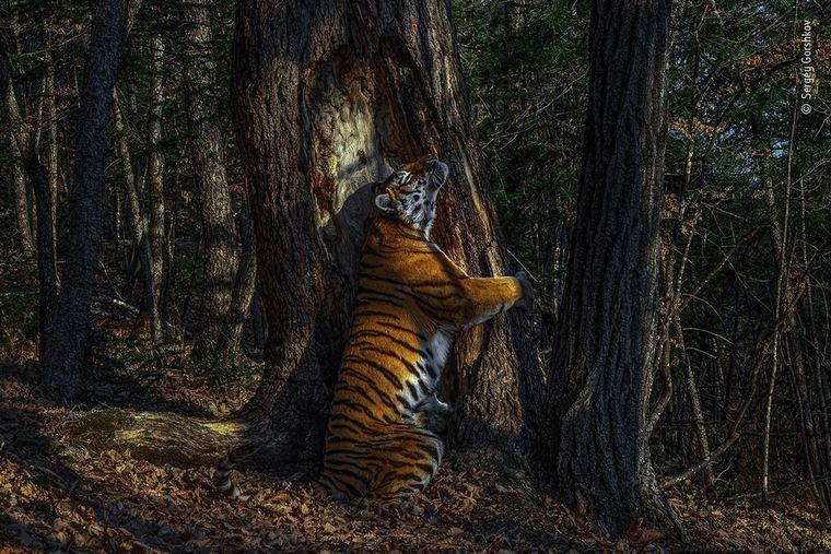 FOTO: Sergey Gorshkov fue elegido el fotógrafo de vida silvestre del año.