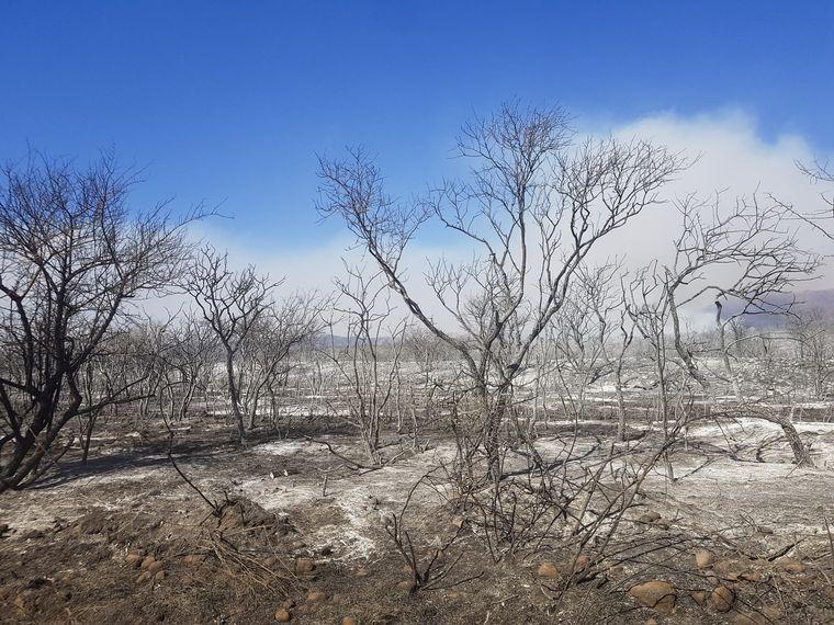 FOTO: Más de 10 provincias sufrieron incendios en lo que va del año.