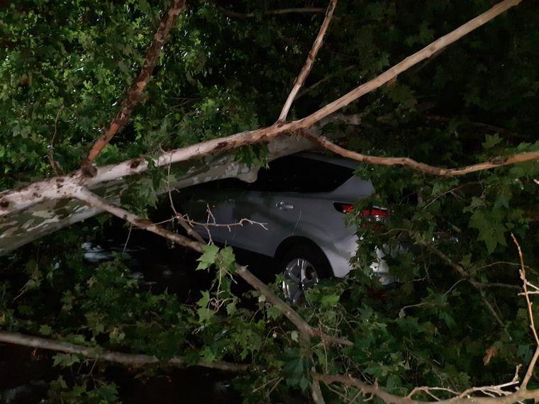 FOTO: Árboles caídos, una postal de la tormenta en Santa Fe