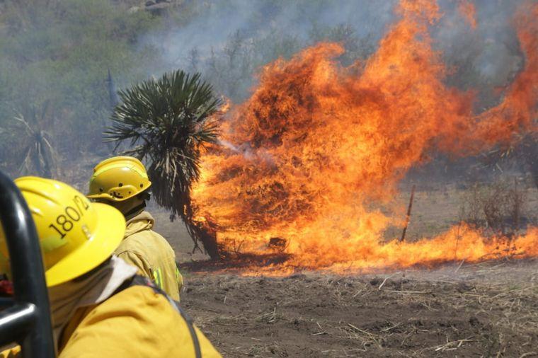 FOTO: Está contenido el incendio forestal cerca de San Pedro Norte.