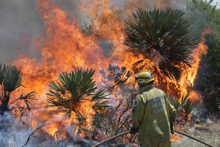 FOTO: El principal inconveniente es la pérdida de pasturas por efecto de las llamas.
