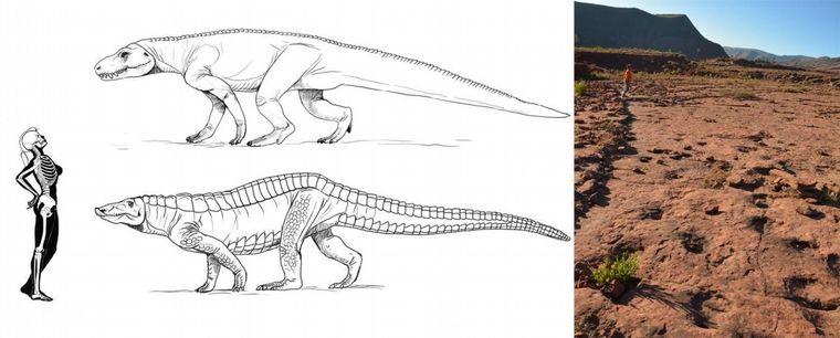 FOTO: Descubren huellas de un animal anterior a los dinosaurios