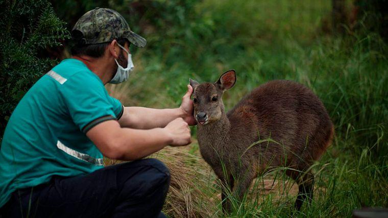 FOTO: Trasladan a más de 120 animales de un predio por malas condiciones