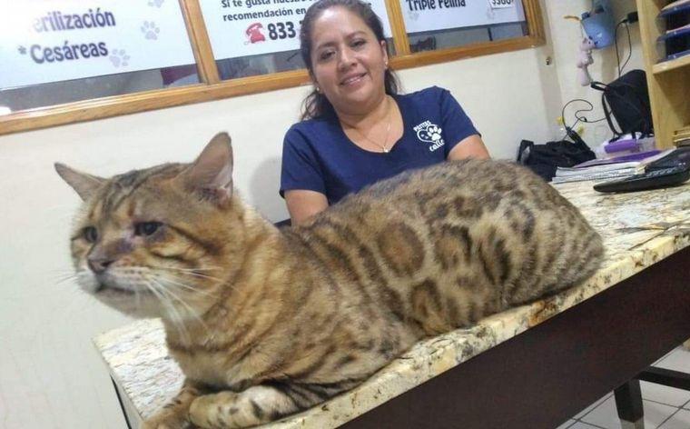 Confunden a gato con un leopardo — Un michi gigante