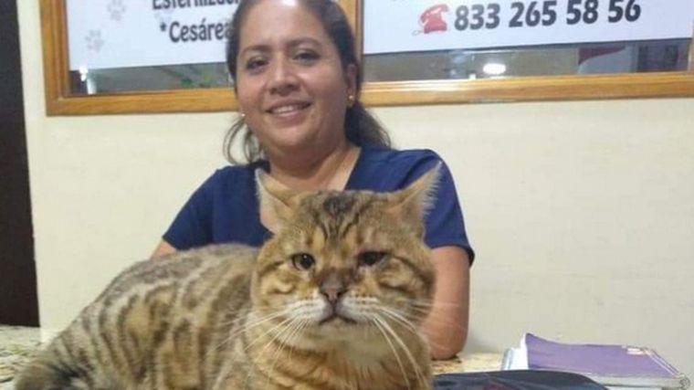 FOTO: Rescatan a un gato gigante que confundieron con un leopardo