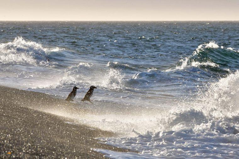 FOTO: Magallanes en Chubut. FOTO: Télam.