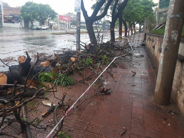 AUDIO: Un árbol caído provocó un choque en avenida Sabattini