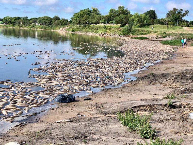 FOTO: Asombra la muerte masiva de peces en el río Salado.
