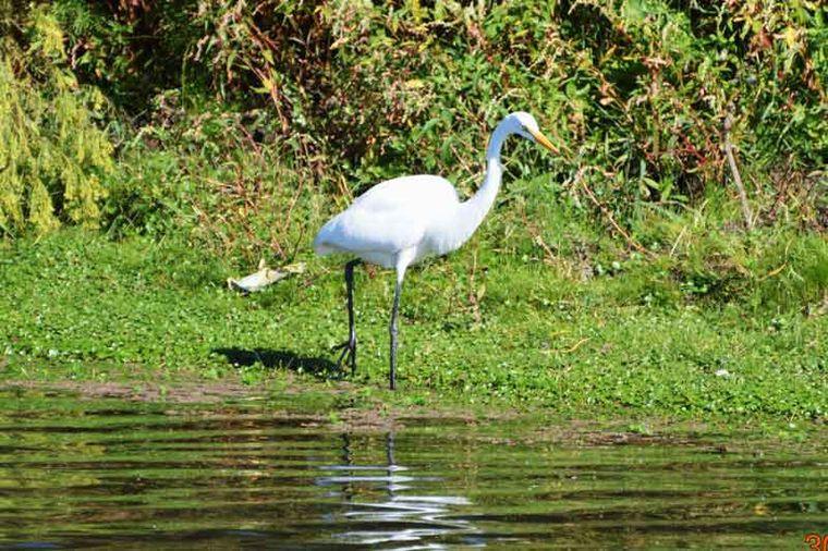 AUDIO: Achiras: Un punto clave para la observación de aves