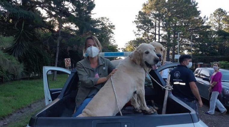 AUDIO: Abandonó a sus dos perros Golden y quedó filmado