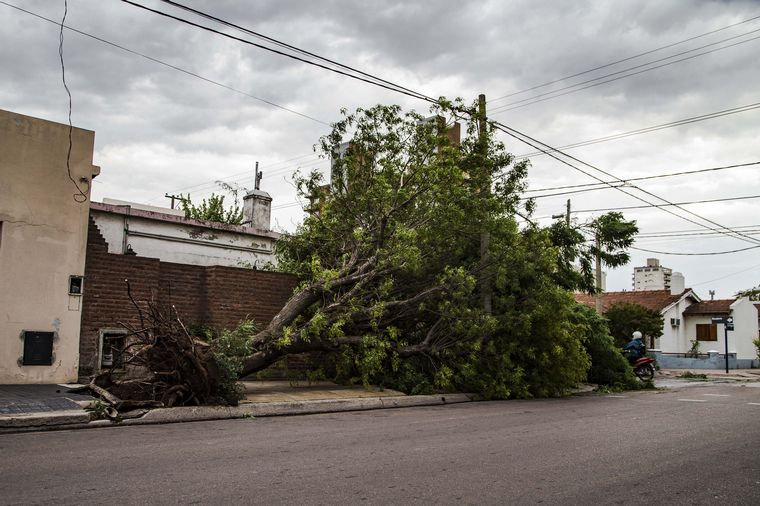 FOTO: Destrozos del temporal en La Pampa (Foto: Télam)