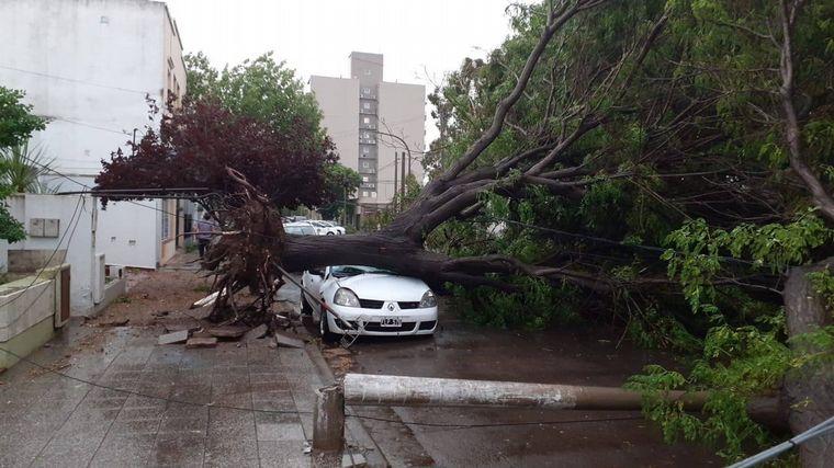 FOTO: Un árbol se cayó sobre un auto en Agustín Garzón al 3300, Córdoba