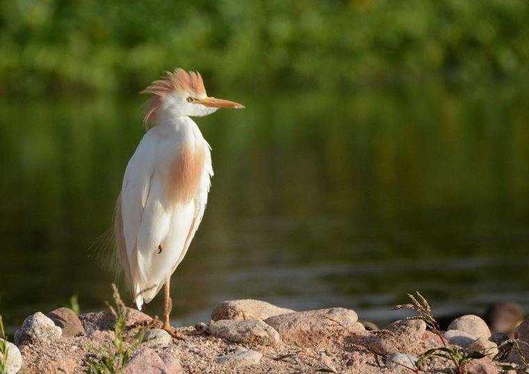 FOTO: Avistaje de aves en San Lorenzo