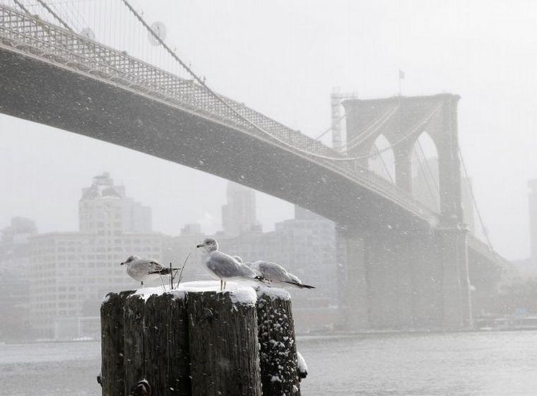 FOTO: Nueva York espera la Navidad cubierta de blanco