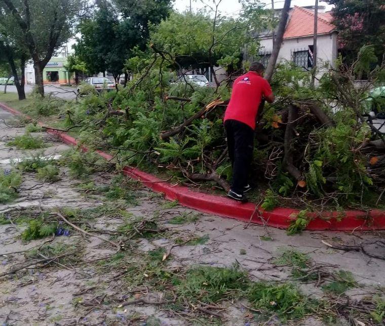 AUDIO: Hay al menos 30 árboles caídos por la tormenta