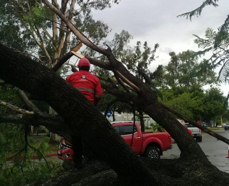 FOTO: Árboles caídos tormenta Córdoba