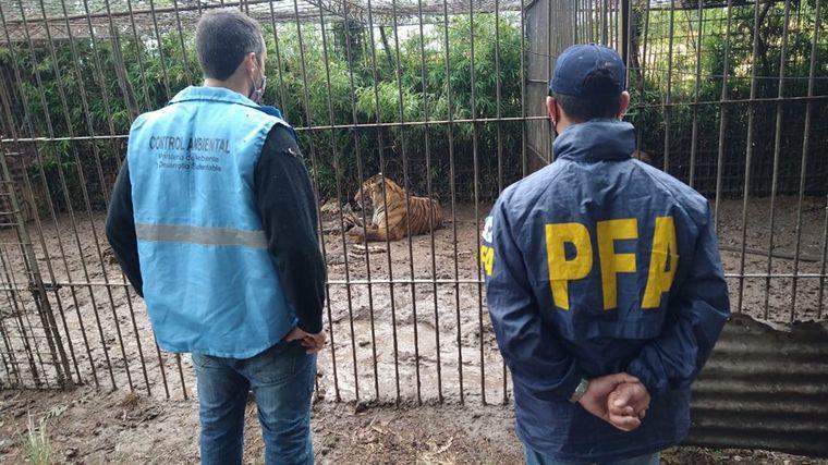 FOTO: En total 301 animales fueron rescatados del cautiverio en Mar del Plata.